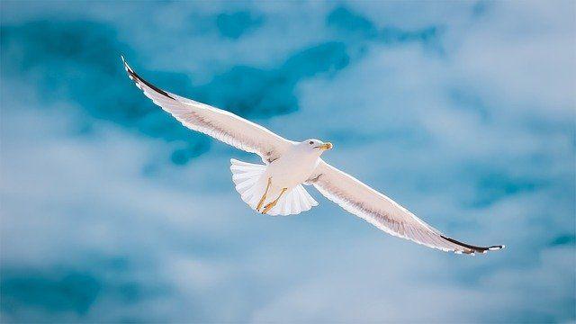 «Твоя новая жизнь свободная от страхов и тревог»
